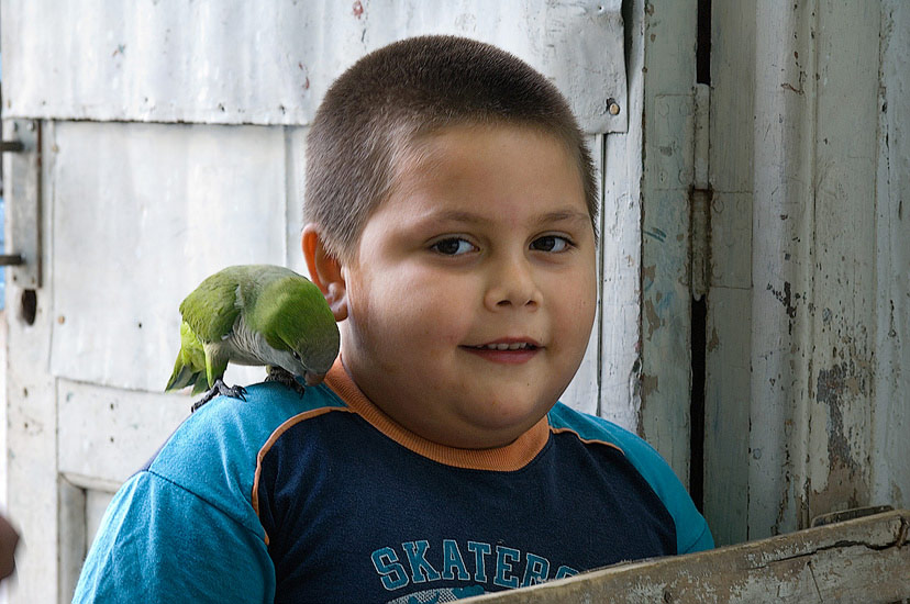 Portrait of the Boy with a Parrot. Boca Juniors Neighborhood, La Boca, Buenos Aires, Argentina. - Buenos-Aires-People-City-Places-Argentina - Mike Reyfman Photography