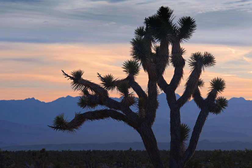 Joshua Tree Jobs | Jobs in Joshua Tree CA | Snagajob