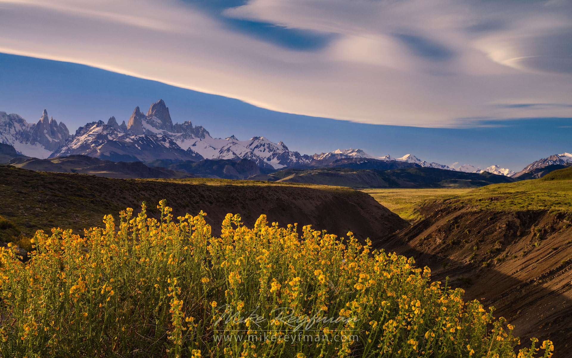 Patagonia splines. Native to Patagonia Paramela flowers (Adesmia boronioides) on Las Vueltas River canyon overlook. Fitzroy and Cerro Torre massifs on the background.   - Fitzroy-Cerro-Torre-Perito-Moreno-Patagonia-Argentina - Mike Reyfman Photography