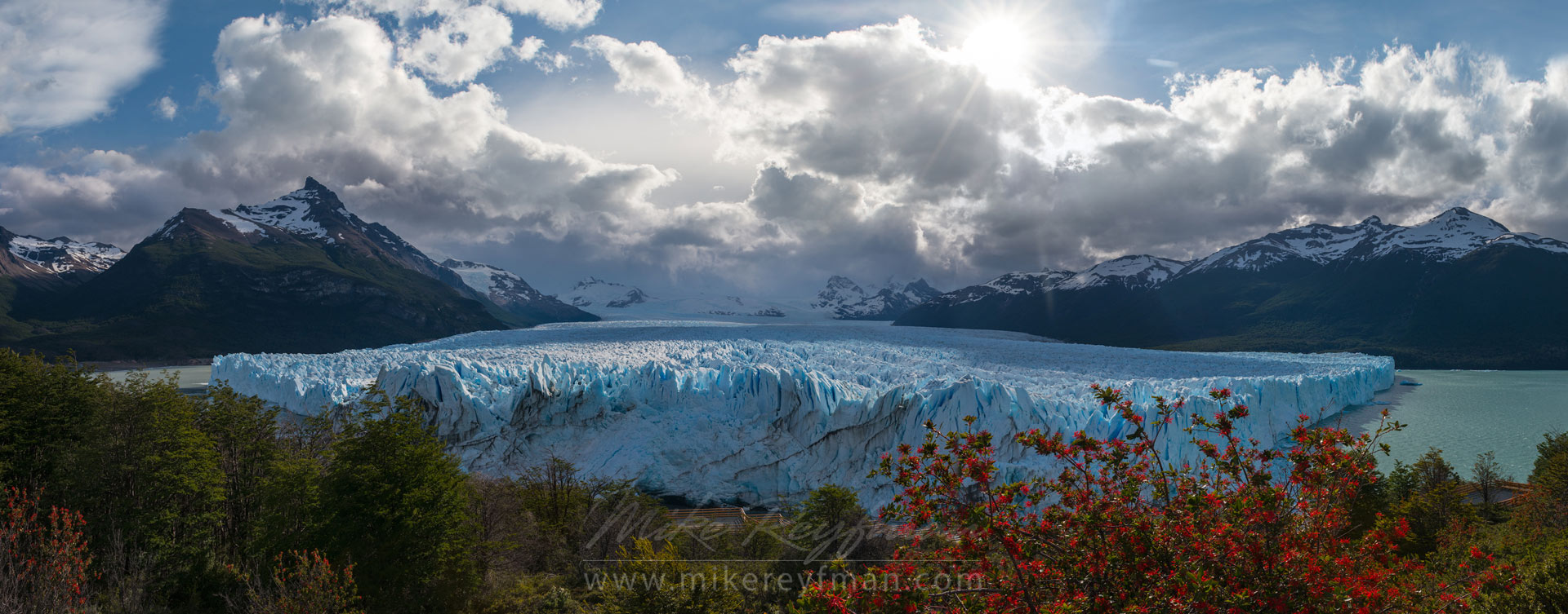 Panoramic view of Perito Moreno Glacier with Fire Bush on foreground. December 2013. Lago Argentino, Los Glaciares National Park, Patagonia, Argentina. - Fitzroy-Cerro-Torre-Perito-Moreno-Patagonia-Argentina - Mike Reyfman Photography