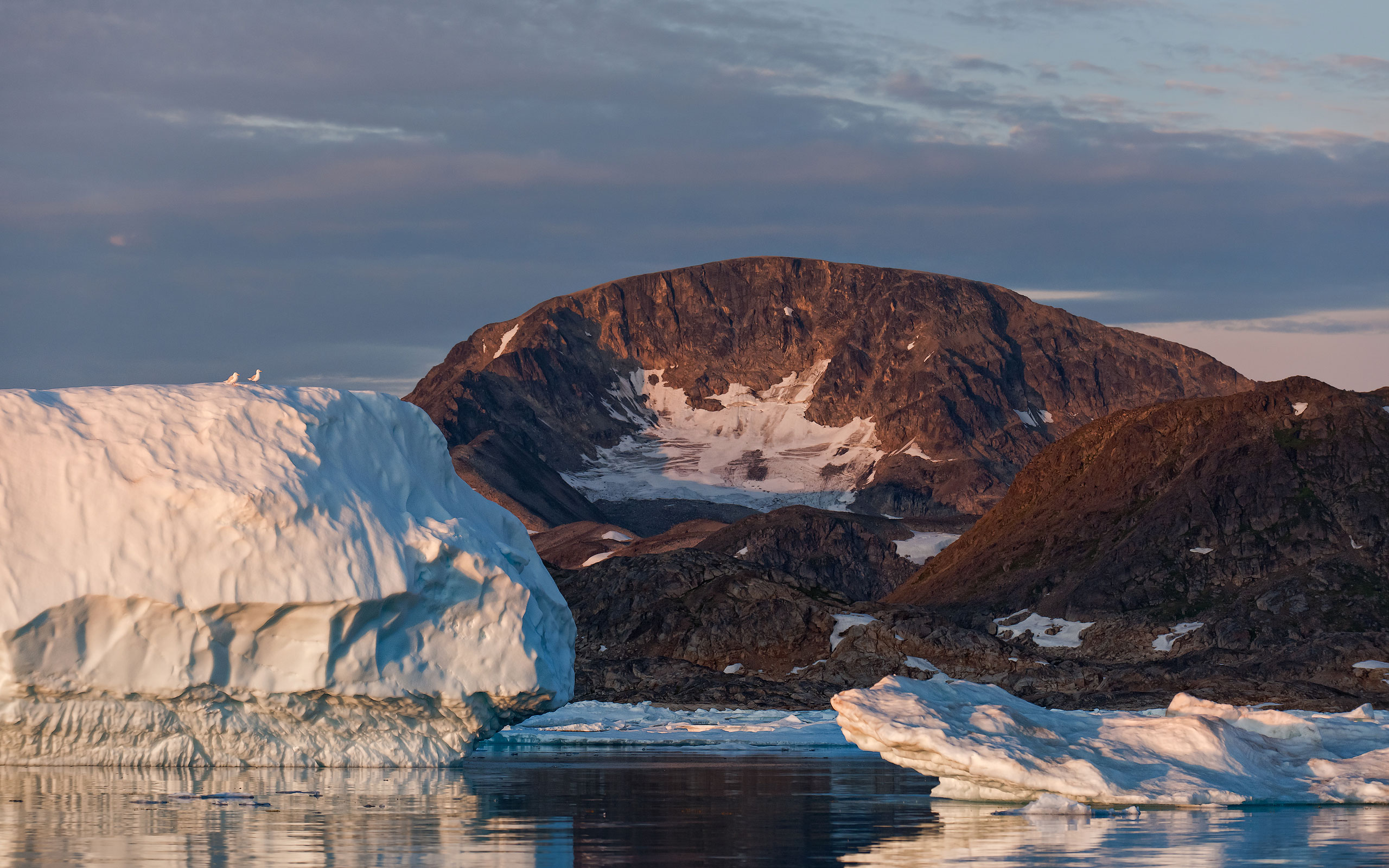 Seagulls on the iceberg. Kulusuk island. Southeastern Greenland. - Greenland-Iceberg-Factory-1 - Mike Reyfman Photography