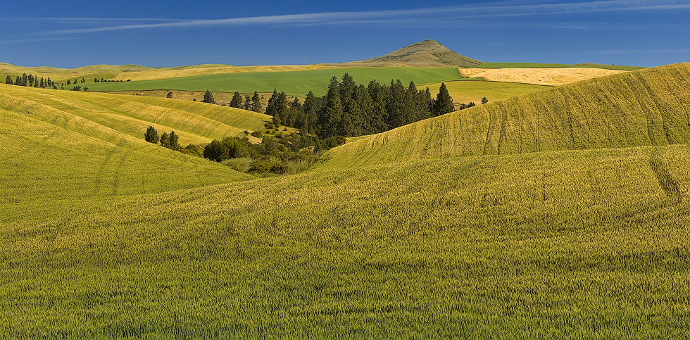 Distant view of Steptoe Butte from the field of maturing wheat. Palouse, Washington, USA - Palouse-Eastern-Washington-American-Tuscany - Mike Reyfman Photography