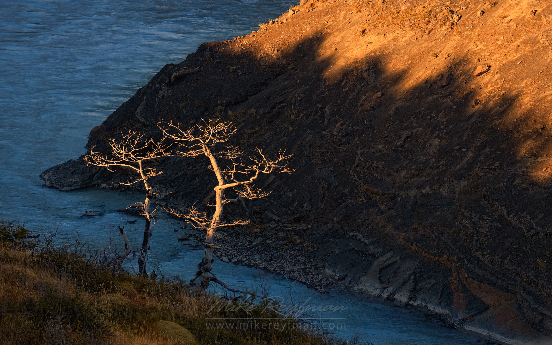 Trees on the shore of Paine River. Torres del Paine National Park, Magallanes and Antartica Chilena Region XII, Patagonia, Chile. - Torres-Del-Paine-National-Park-Patagonia-Chile - Mike Reyfman Photography