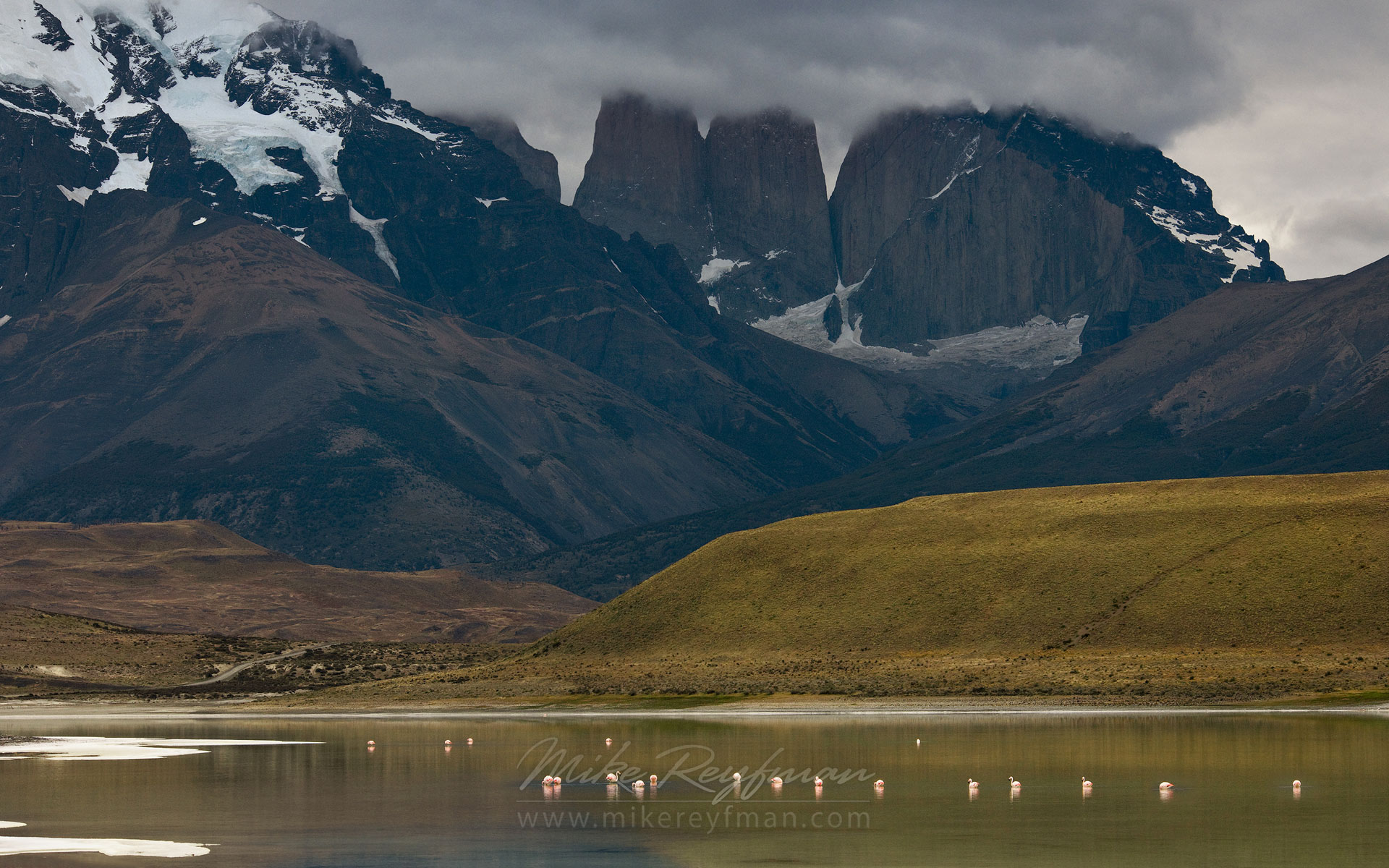 Flamingos on Laguna Amarga. Torres del Paine National Park, Ultima Esperanza Province, Magallanes and Antartica Chilena Region XII, Patagonia, Chile. - Torres-Del-Paine-National-Park-Patagonia-Chile - Mike Reyfman Photography