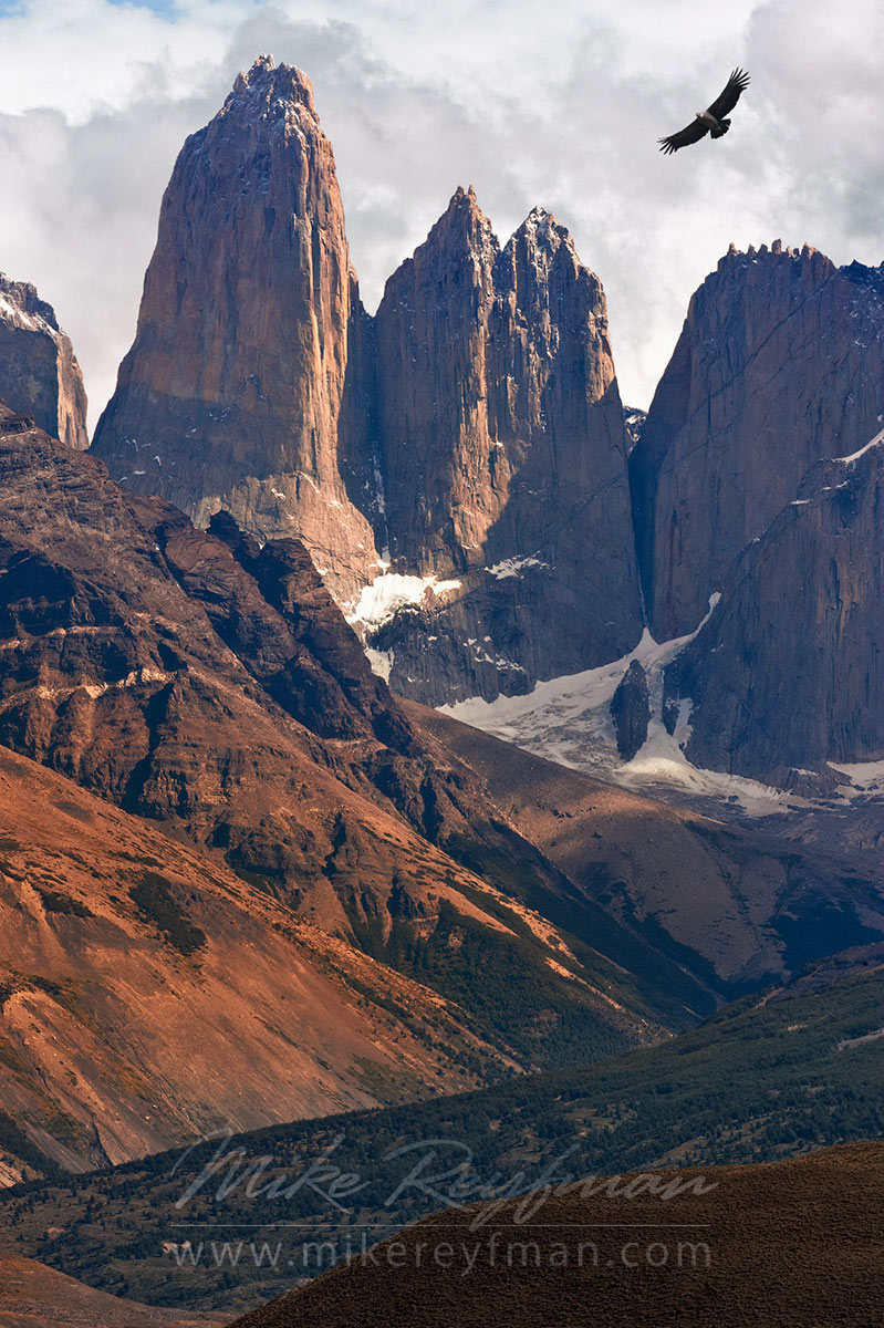 Towers of Pine and flying condor. Torres del Paine National Park, Ultima Esperanza Province, Magallanes and Antartica Chilena Region XII, Patagonia, Chile. - Torres-Del-Paine-National-Park-Patagonia-Chile - Mike Reyfman Photography