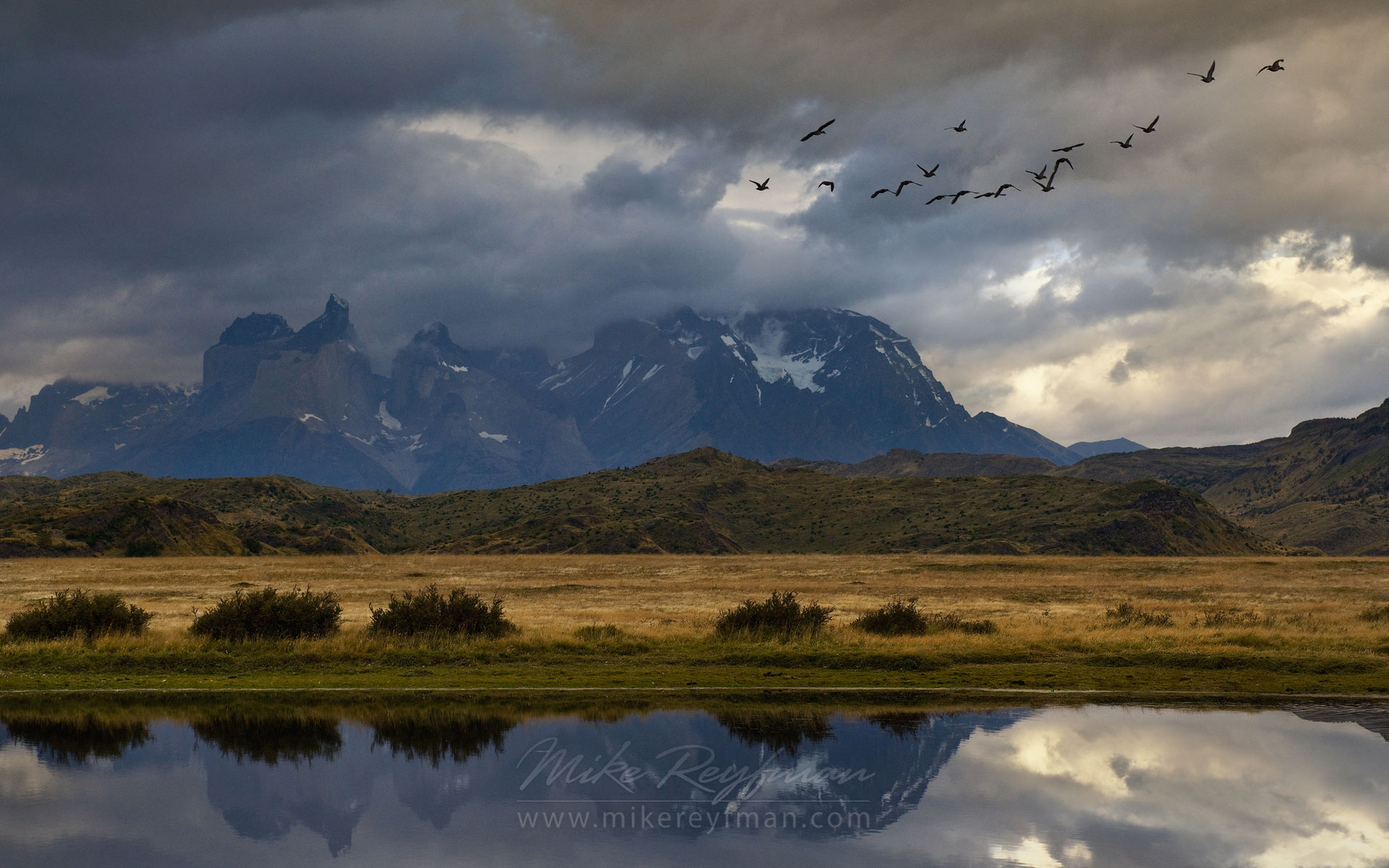Flock of Upland Geese flying over Patagonia Steppe with Cordillera del Paine on the background. Ultima Esperanza Province, Magallanes and Antartica Chilena Region XII, Patagonia, Chile. - Torres-Del-Paine-National-Park-Patagonia-Chile - Mike Reyfman Photography