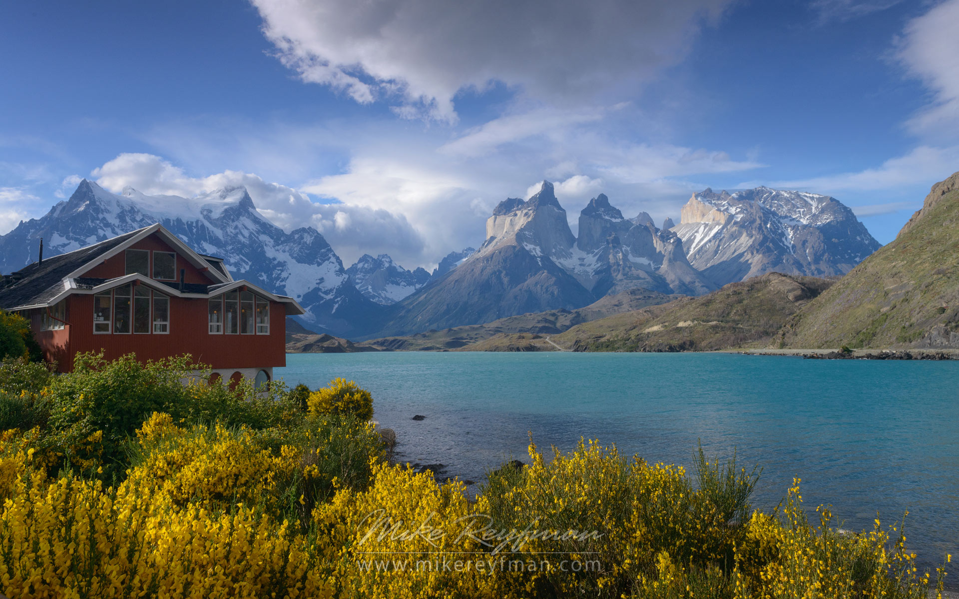 Hosteria Pehoe, Yellow Retama broom bushes and turquoise waters of Lago Pehoe with Cordillera del Paine on the background. Torres del Paine National Park, Magallanes and Antartica Chilena Region XII, Patagonia, Chile. - Torres-Del-Paine-National-Park-Patagonia-Chile - Mike Reyfman Photography