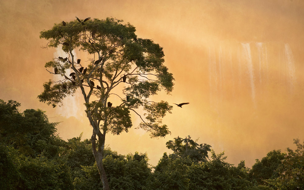 Perch for black vultures. Iguassu Falls, Brazil. - Gallery-1 - Mike Reyfman Photography