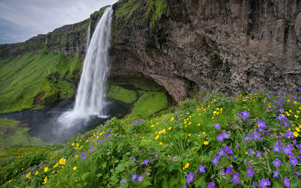 Seijalandsfoss and Flowers. Southern Iceland.
