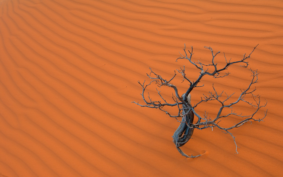 Etude with a Dry Branch. Coral Pink Sand Dunes State Park, Utah, USA.  - Gallery-2 - Mike Reyfman Photography