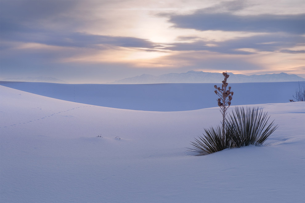 White on White. Snow-covered Dunes.  White Sands Dunes National Park, New Mexico, USA.
