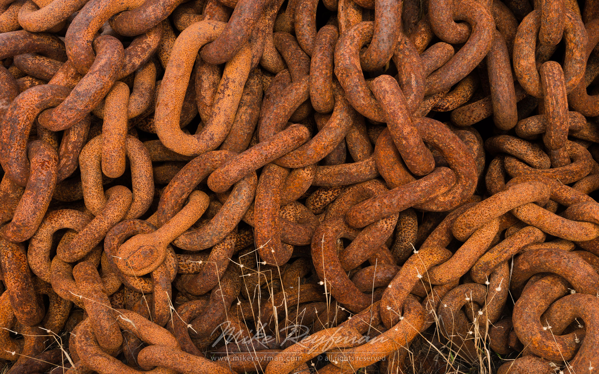 Rusty anchor chain. Abandoned Grytviken Whaling Station. South Georgia, Sub-Antarctic - King-Penguins-South-Georgia-Sub-Antarctic - Mike Reyfman Photography
