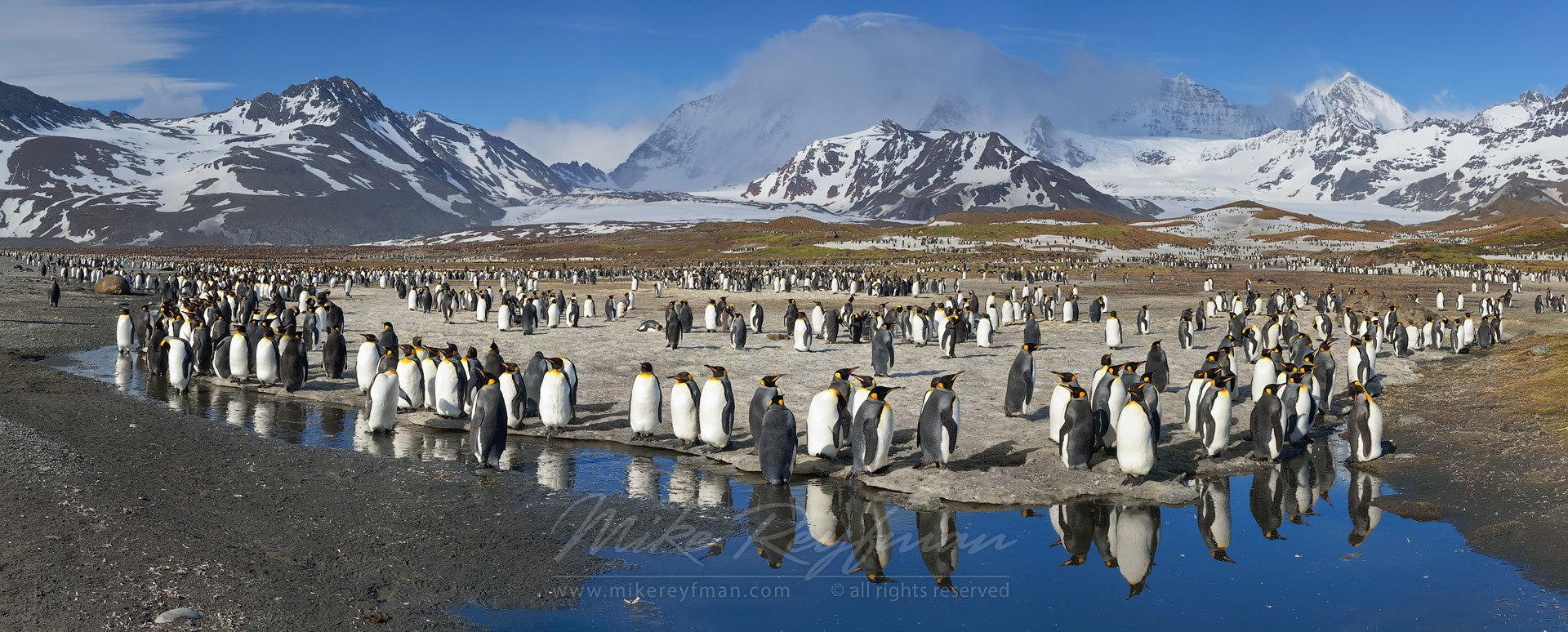Terra Penguinia. King Penguin (Aptenodytes patagonicus) Colony, Salisbury Plain, South Georgia, Sub-Antarctic. Panoramic