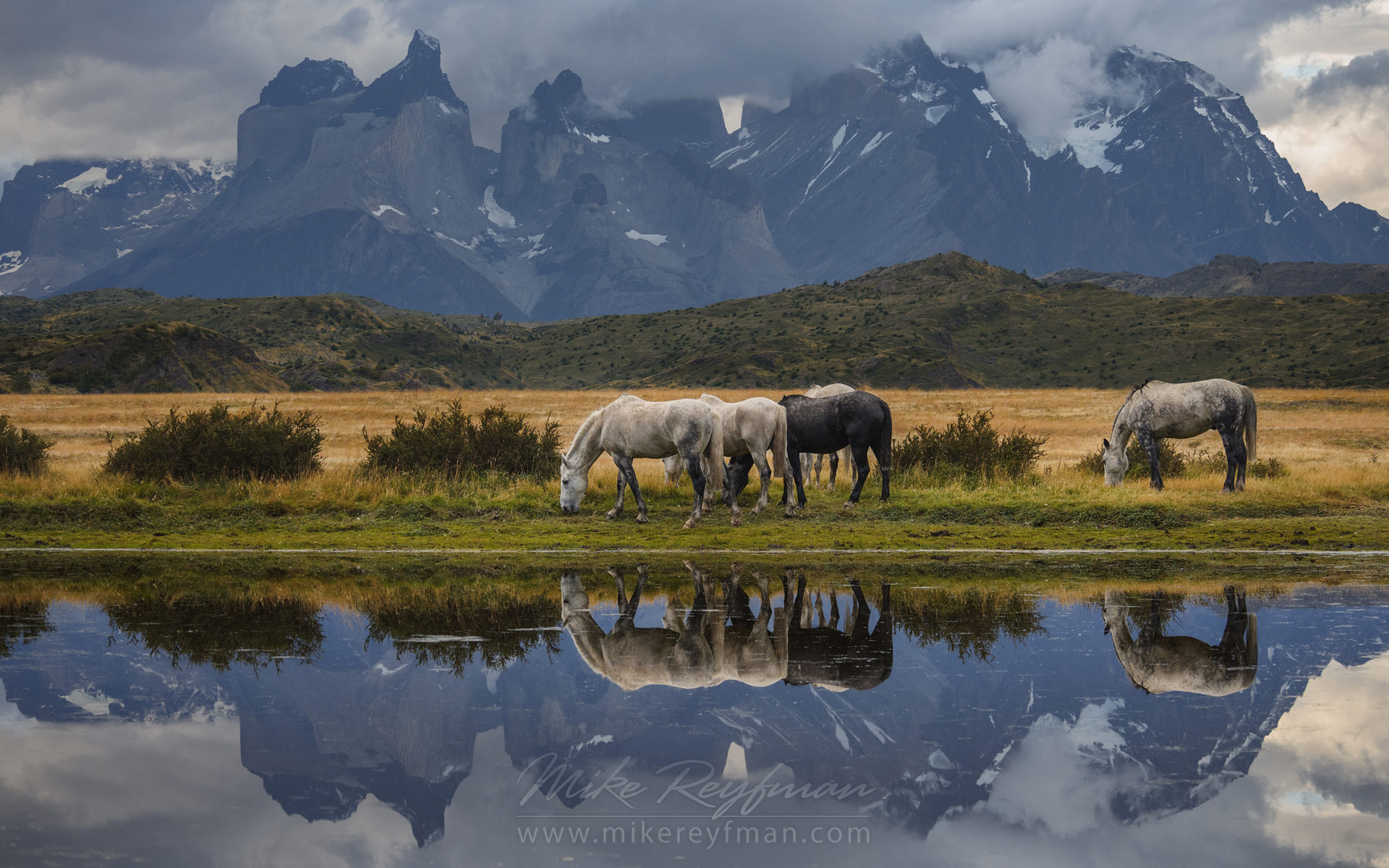 Horses are grazing on the beautiful background of Patagonian Andes. Torres del Paine National Park, Ultima Esperanza Province, Magallanes and Antartica Chilena Region XII, Patagonia, Chile. - Patagonia-Wildlife-and-Horses - Mike Reyfman Photography