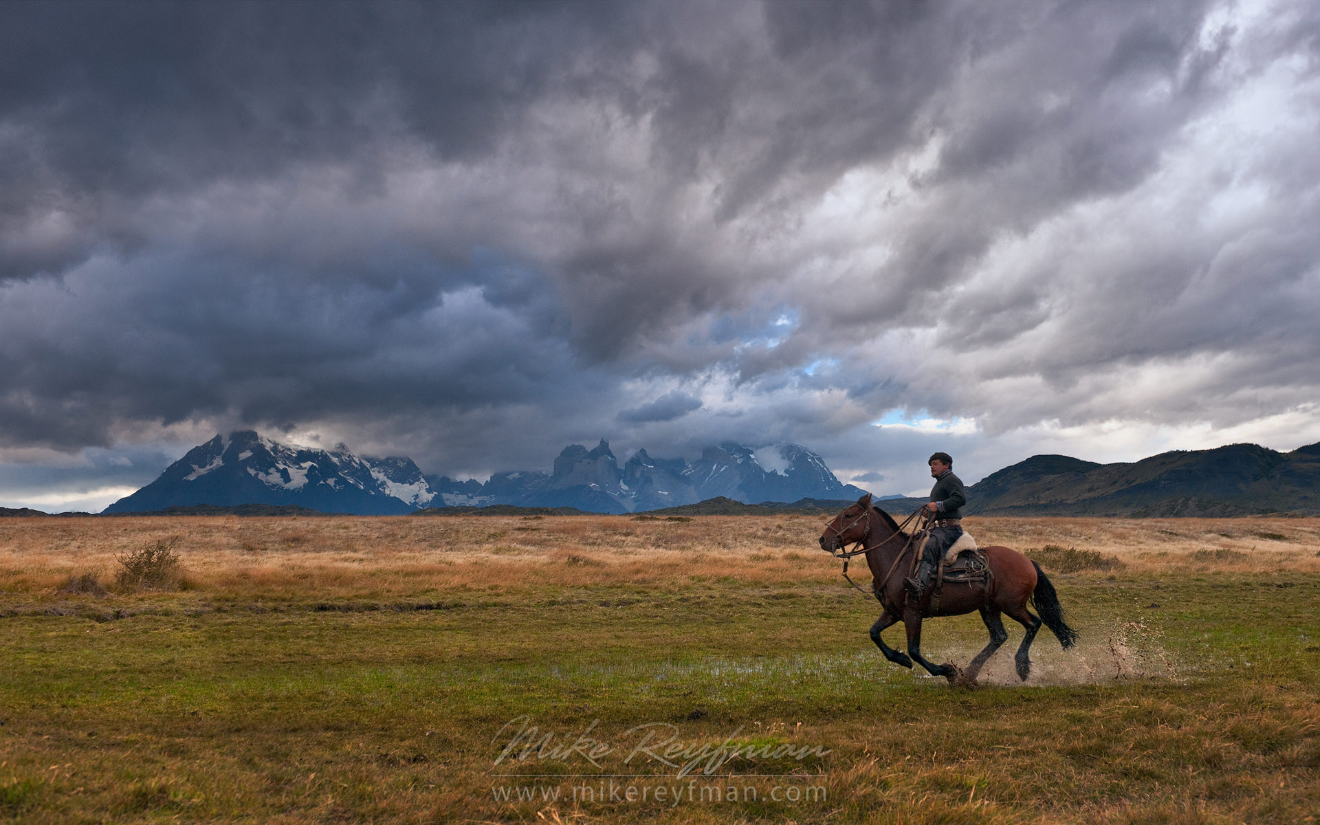 Gaucho galloping on a horse through Patagonian steppes after the rain. Mountains of Torres del Paine National Park are on the backdrop. Ultima Esperanza Province, Magallanes and Antartica Chilena Region XII, Patagonia, Chile. - Patagonia-Wildlife-and-Horses - Mike Reyfman Photography