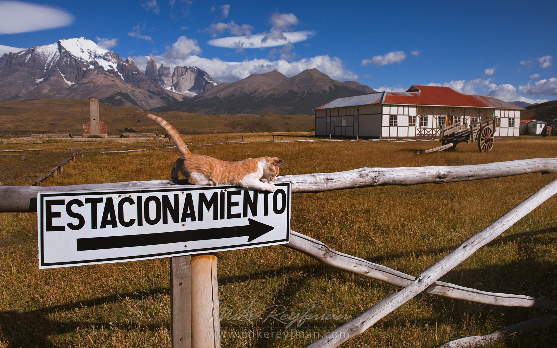 Kitten playing on the fence of old estancia. Towers of Paine are on the background. Torres del Paine National Park, Ultima Esperanza Province, Magallanes and Antartica Chilena Region XII, Patagonia, Chile. - Patagonia-Wildlife-and-Horses - Mike Reyfman Photography