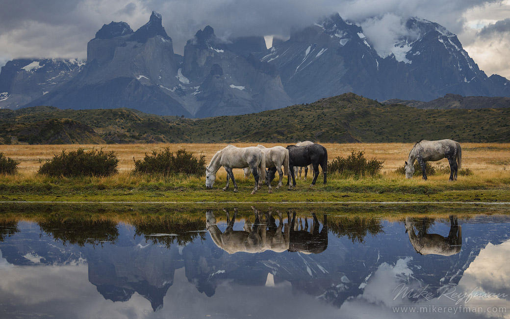 Horses are grazing on the beautiful background of Patagonian Andes. Torres del Paine National Park, Ultima Esperanza Province, Magallanes and Antartica Chilena Region XII, Patagonia, Chile.