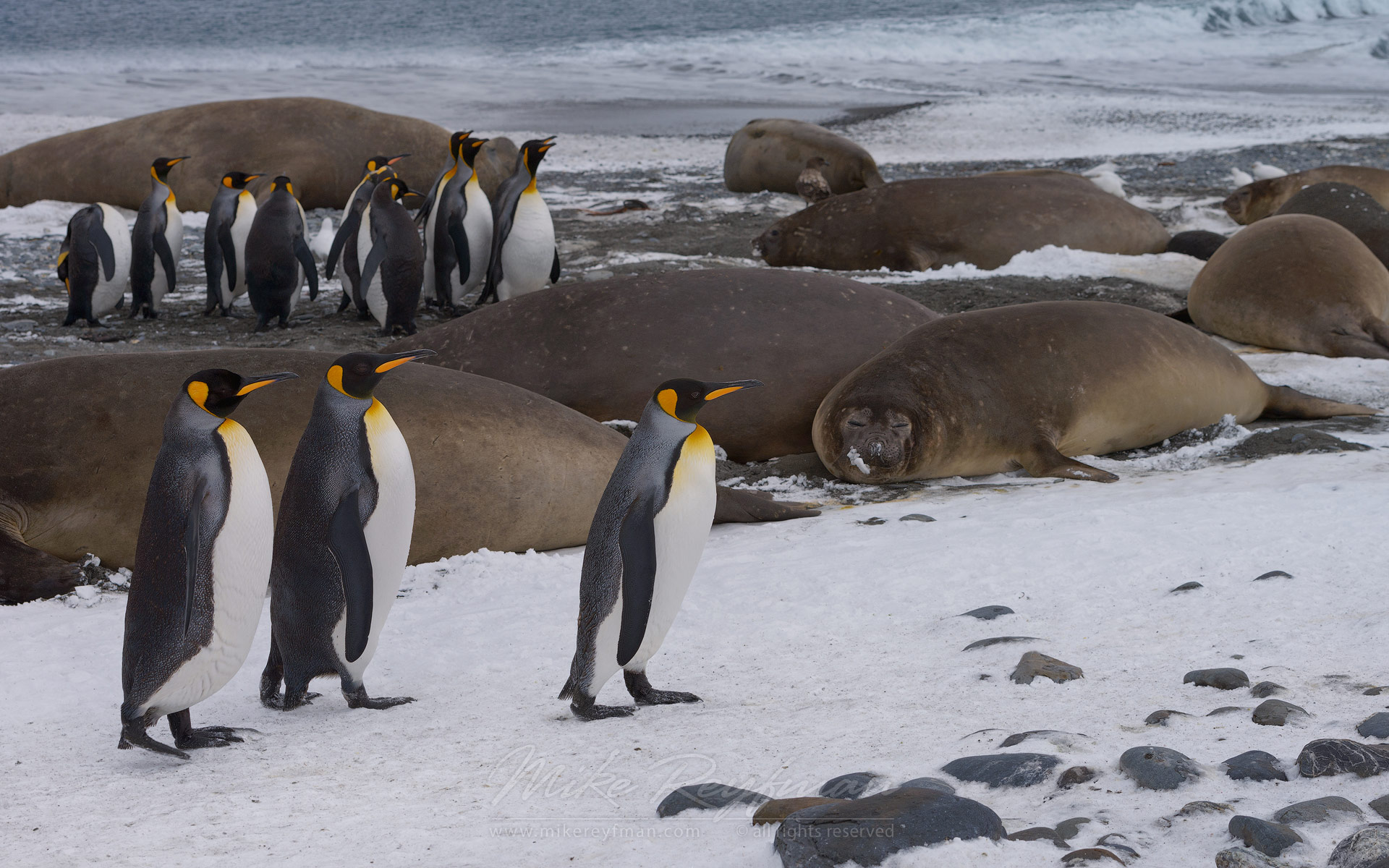should development be allowed in antarctica There might not be a definitive answer as to whether or not tourists should be allowed to visit antarctica, but it is incredibly clear that this continent can use all the advocates it can get.