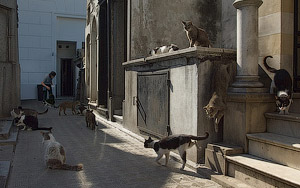Cats of Recoleta. La Recoleta Cemetery, Buenos Aires, Argentina - Landscape, Nature and Cityscape Photography - Mike Reyfman Photography - Fine Art Prints, Stock Images, Nature Abstracts