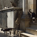 The Cats of Recoleta. La Recoleta Cemetery, Buenos Aires, Argentina - Landscape, Nature and Cityscape Photography - Mike Reyfman Photography - Fine Art Prints, Stock Images, Nature Abstracts