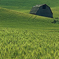 Palouse, Eastern Washington, American Tuscany, USA - Landscape, Nature and Cityscape Photography - Mike Reyfman Photography - Fine Art Prints, Stock Images, Nature Abstracts