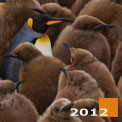 Terra Penguinia. King Penguin Creches at Saint Andrew's Bay and Salisbury Plain. South Georgia, Sub-Antarctic. - Landscape, Nature and Cityscape Photography - Mike Reyfman Photography - Fine Art Prints, Stock Images, Nature Abstracts