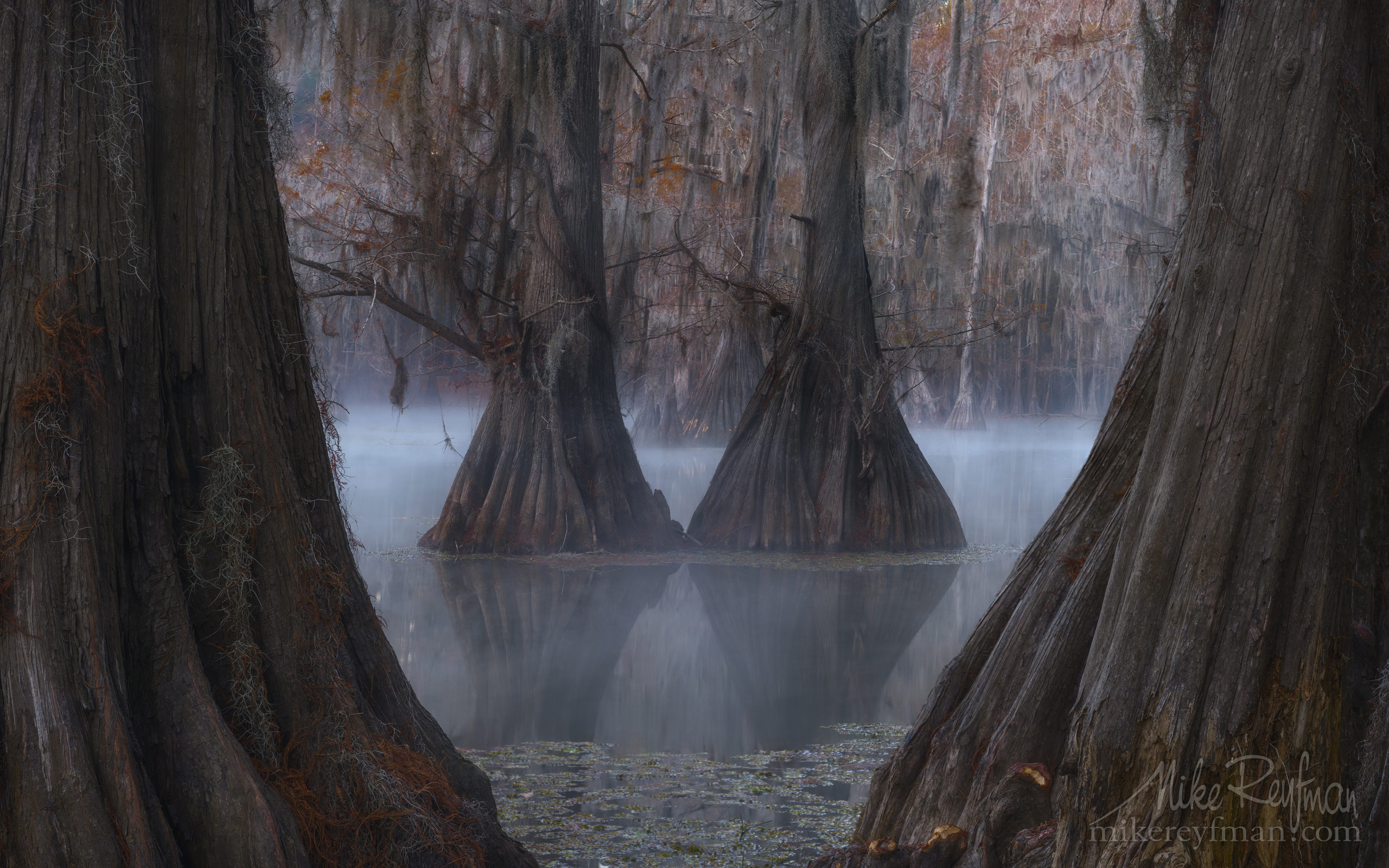 Bald Cypress trees in the swamp. Foggy morning on Caddo Lake, Texas, US 008_LT1_50A3264.jpg - Bold Cypress and Tupelo Trees in the swamps of Atchafalaya River Basin. Caddo, Martin and Fousse Lakes. Texas/Louisiana, USA. - Mike Reyfman Photography