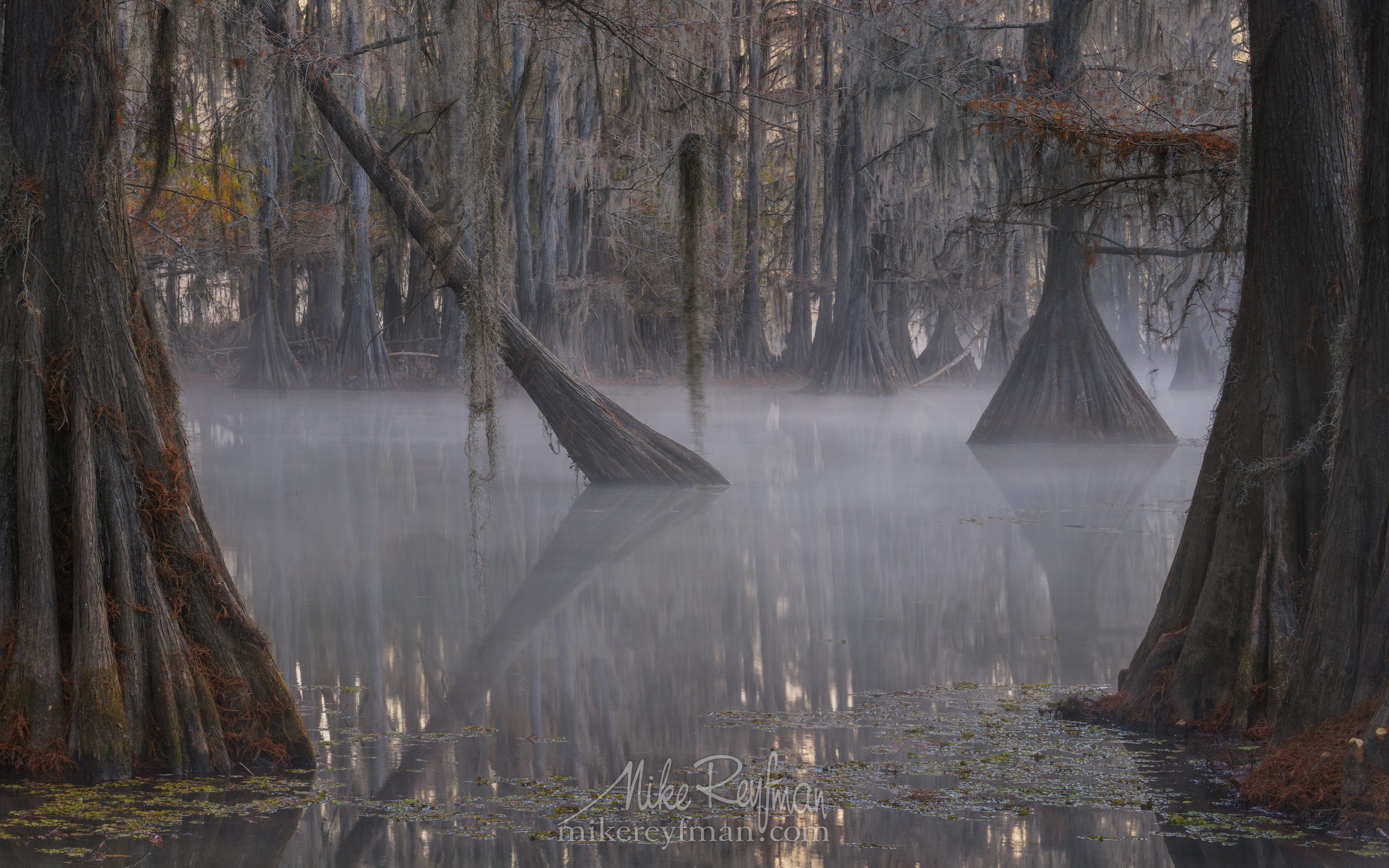 Bald Cypress trees in the swamp. Foggy morning on Caddo Lake, Texas, US 012-LT1-50A3291.jpg - Bold Cypress and Tupelo Trees in the swamps of Atchafalaya River Basin. Caddo, Martin and Fousse Lakes. Texas/Louisiana, USA. - Mike Reyfman Photography