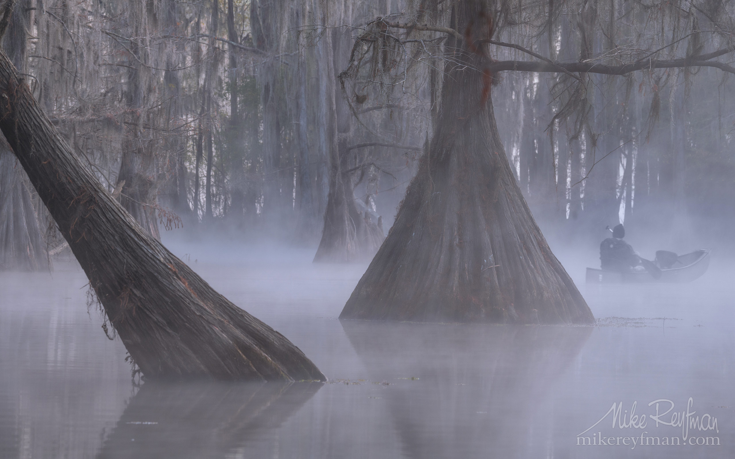 Kayaker paddling between Bald Cypress trees in the fog. Caddo Lake, Texas, US 016-LT1-50A3281.jpg - Bold Cypress and Tupelo Trees in the swamps of Atchafalaya River Basin. Caddo, Martin and Fousse Lakes. Texas/Louisiana, USA. - Mike Reyfman Photography