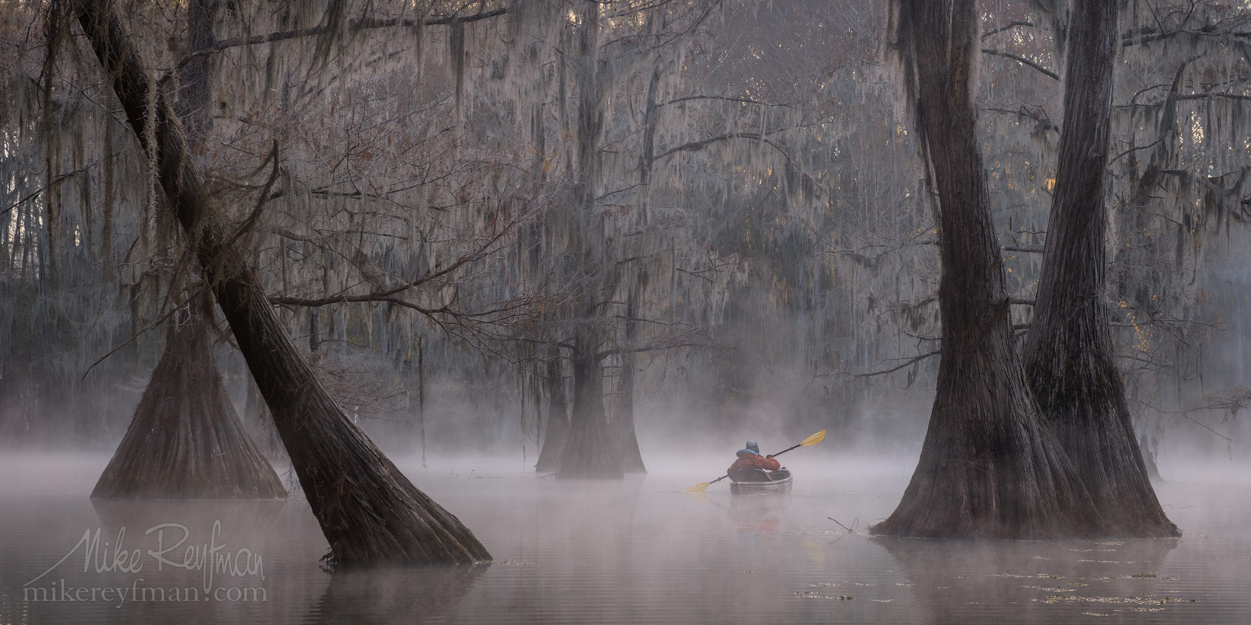 Kayaker paddling between Bald Cypress trees in the fog. Caddo Lake, Texas, US 017-LT1-50A3315_Pano-2x1.jpg - Bold Cypress and Tupelo Trees in the swamps of Atchafalaya River Basin. Caddo, Martin and Fousse Lakes. Texas/Louisiana, USA. - Mike Reyfman Photography