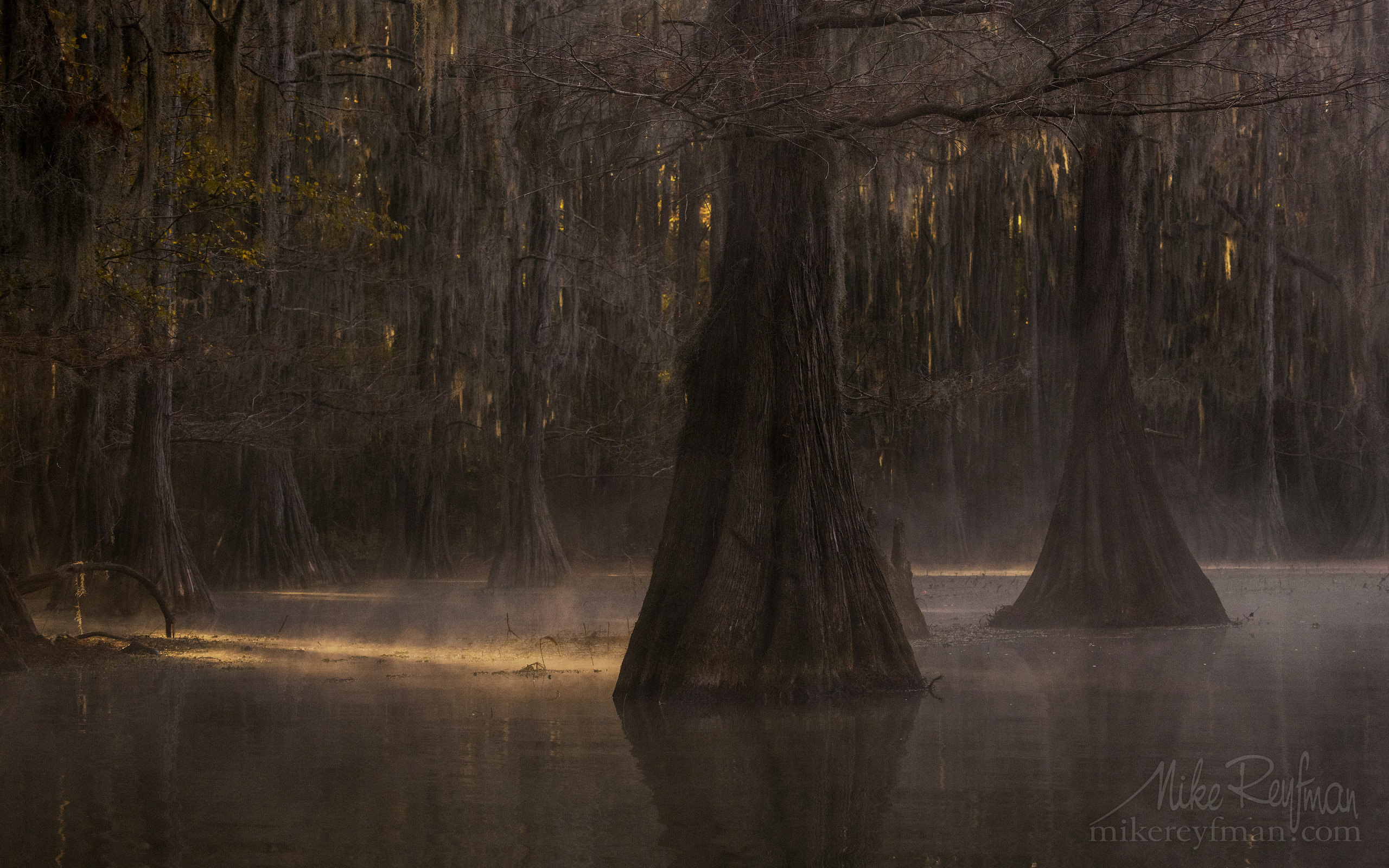 Bald Cypress trees in the swamp. Foggy morning on Caddo Lake, Texas, US 037-LT1-50A3444.jpg - Bold Cypress and Tupelo Trees in the swamps of Atchafalaya River Basin. Caddo, Martin and Fousse Lakes. Texas/Louisiana, USA. - Mike Reyfman Photography