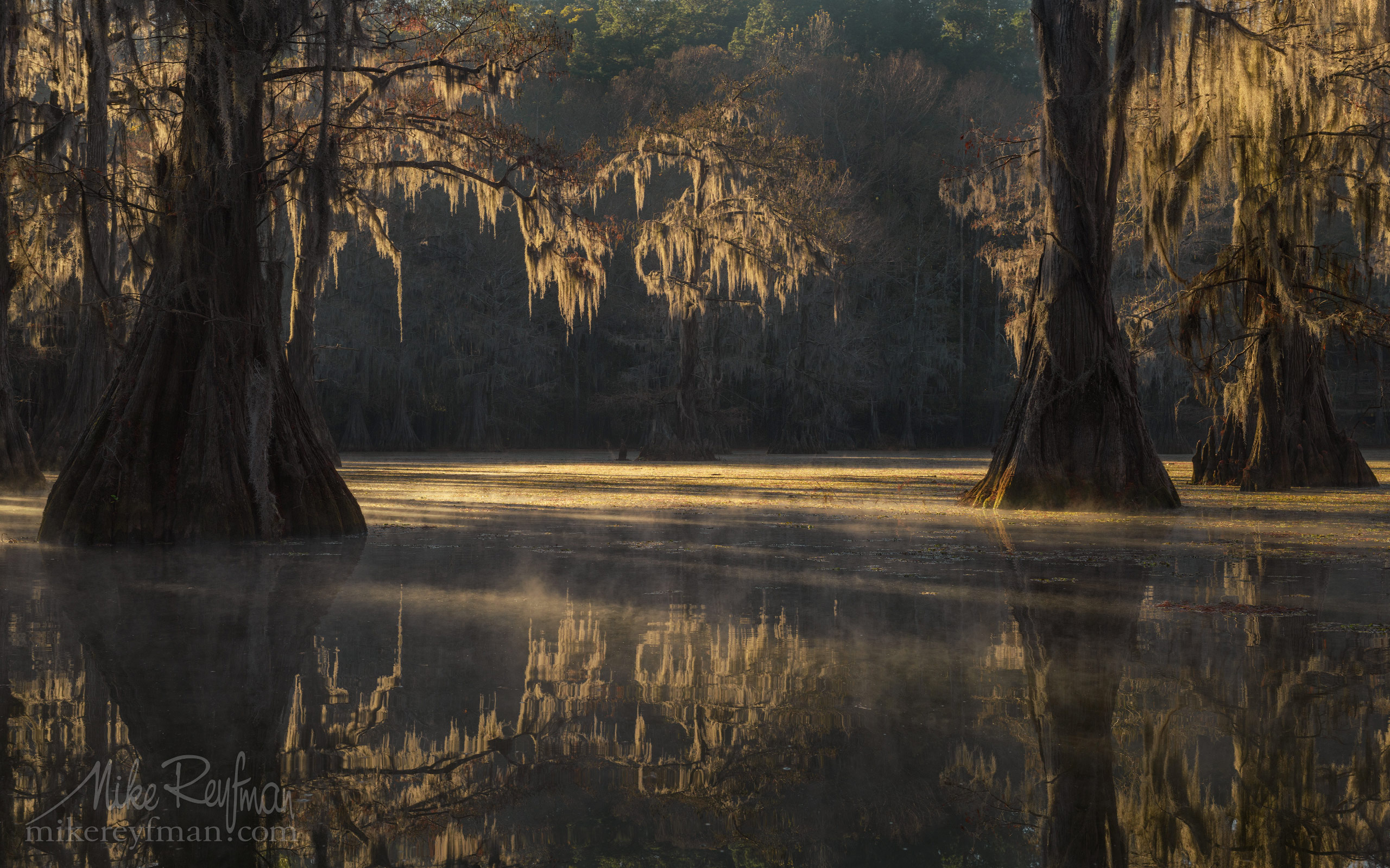 Bald Cypress trees in the swamp. Foggy morning on Caddo Lake, Texas, US 043-LT1-50A3625.jpg - Bold Cypress and Tupelo Trees in the swamps of Atchafalaya River Basin. Caddo, Martin and Fousse Lakes. Texas/Louisiana, USA. - Mike Reyfman Photography