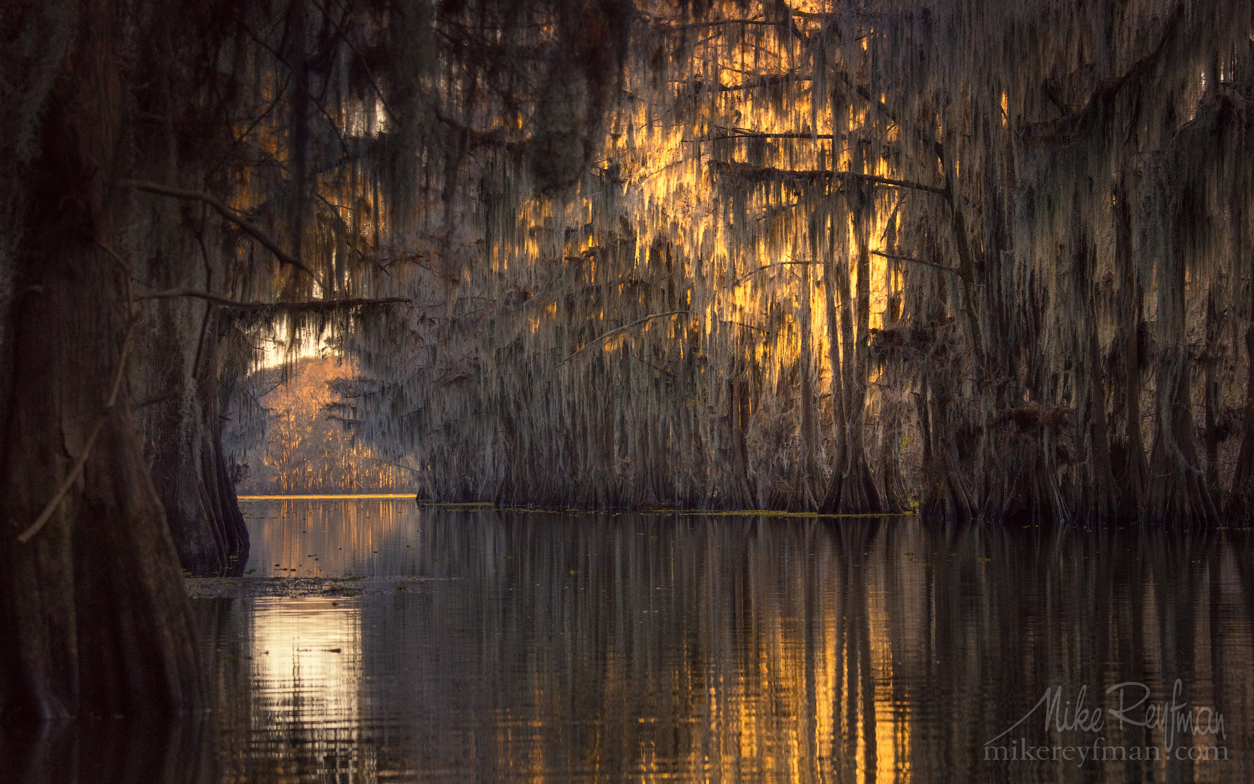 Bald Cypress Trees alley. Government Ditch, Lake Caddo, Texas, US 050-LT1-50A3819.jpg - Bold Cypress and Tupelo Trees in the swamps of Atchafalaya River Basin. Caddo, Martin and Fousse Lakes. Texas/Louisiana, USA. - Mike Reyfman Photography