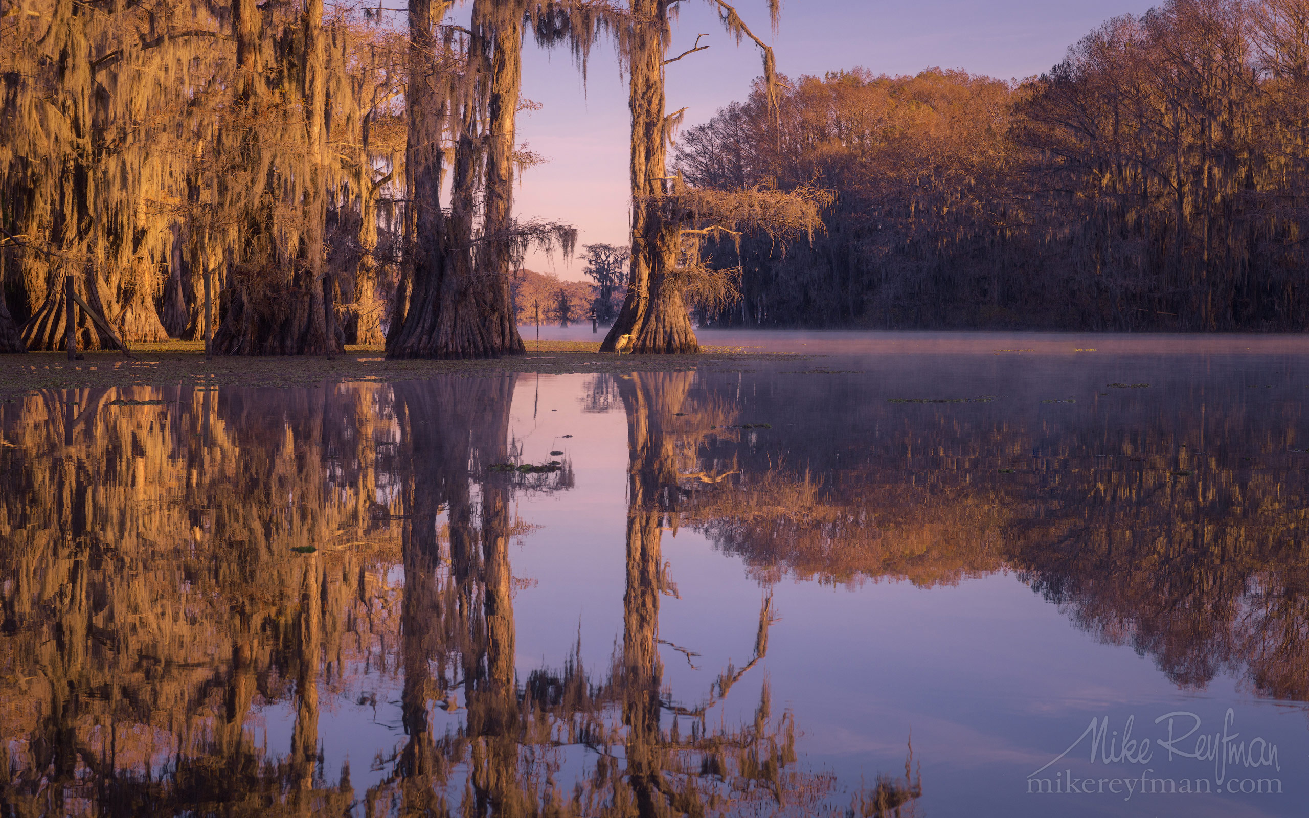 Bald Cypress trees in the watter. Caddo Lake, Texas, US 055-LT1-50A3983.jpg - Bold Cypress and Tupelo Trees in the swamps of Atchafalaya River Basin. Caddo, Martin and Fousse Lakes. Texas/Louisiana, USA. - Mike Reyfman Photography