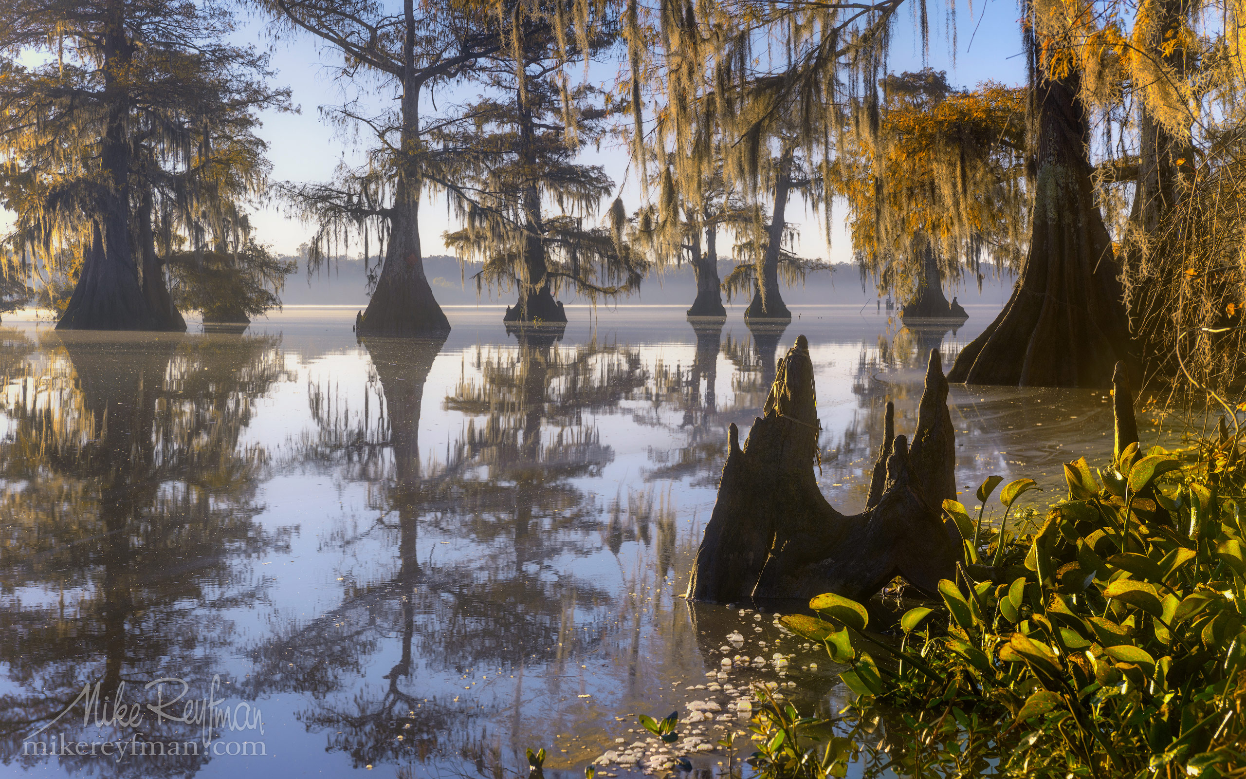 Early morning on Lake Fausse. Bald Cypress trees covered in Spanish Moss. Lake Fausse, Louisiana, US 077-LT1-50A4489.jpg - Bold Cypress and Tupelo Trees in the swamps of Atchafalaya River Basin. Caddo, Martin and Fousse Lakes. Texas/Louisiana, USA. - Mike Reyfman Photography