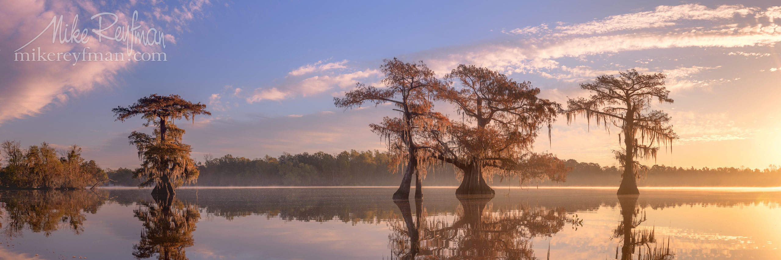 Bald Cypress trees covered in Spanish Moss at sunrise. Lake Fausse, Louisiana, US 078-LT1-50A4424_Pano-3x1.jpg - Bold Cypress and Tupelo Trees in the swamps of Atchafalaya River Basin. Caddo, Martin and Fousse Lakes. Texas/Louisiana, USA. - Mike Reyfman Photography