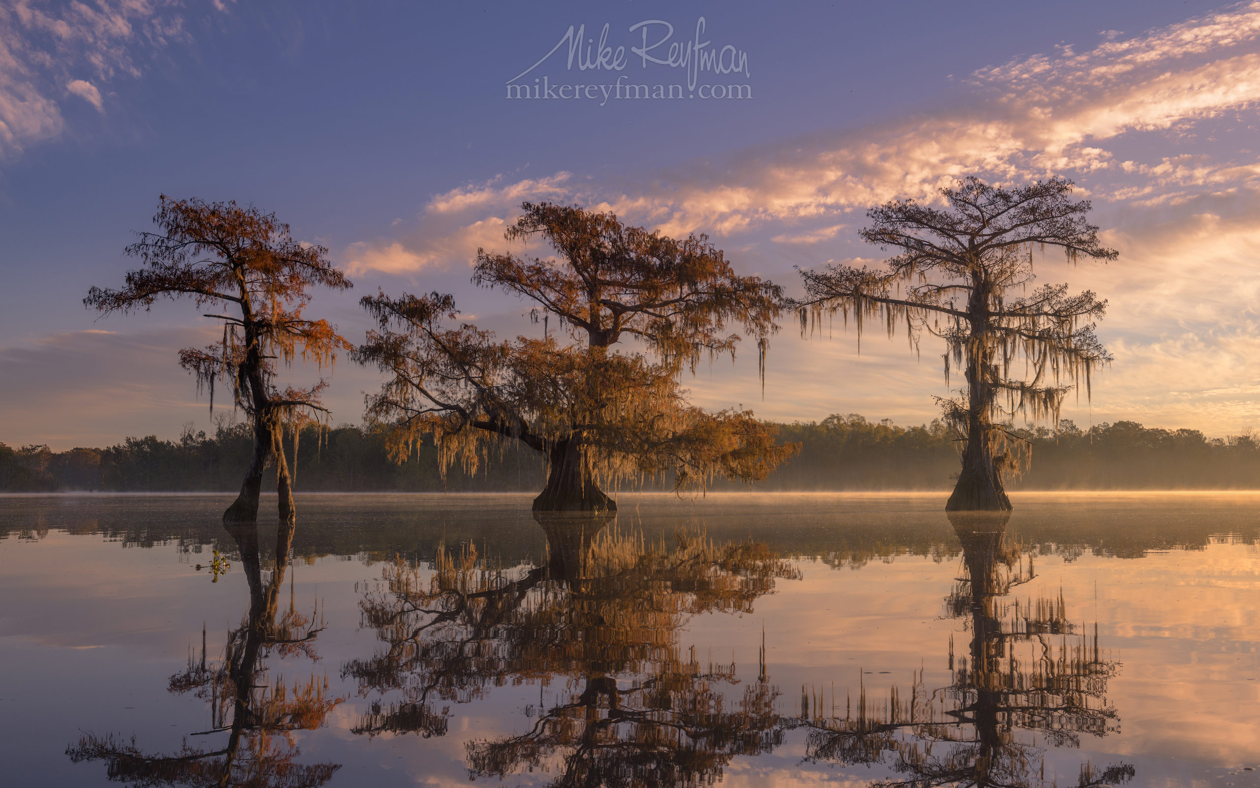 Bald Cypress trees covered in Spanish Moss at sunrise. Lake Fausse, Louisiana, US 080-LT1-50A4416.jpg - Bold Cypress and Tupelo Trees in the swamps of Atchafalaya River Basin. Caddo, Martin and Fousse Lakes. Texas/Louisiana, USA. - Mike Reyfman Photography