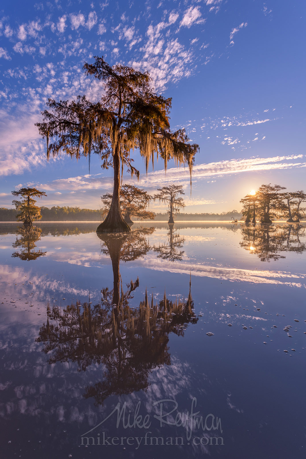 Bald Cypress trees covered in Spanish Moss at sunrise. Lake Fausse, Louisiana, US 082_LT1_50A4470.jpg - Bold Cypress and Tupelo Trees in the swamps of Atchafalaya River Basin. Caddo, Martin and Fousse Lakes. Texas/Louisiana, USA. - Mike Reyfman Photography