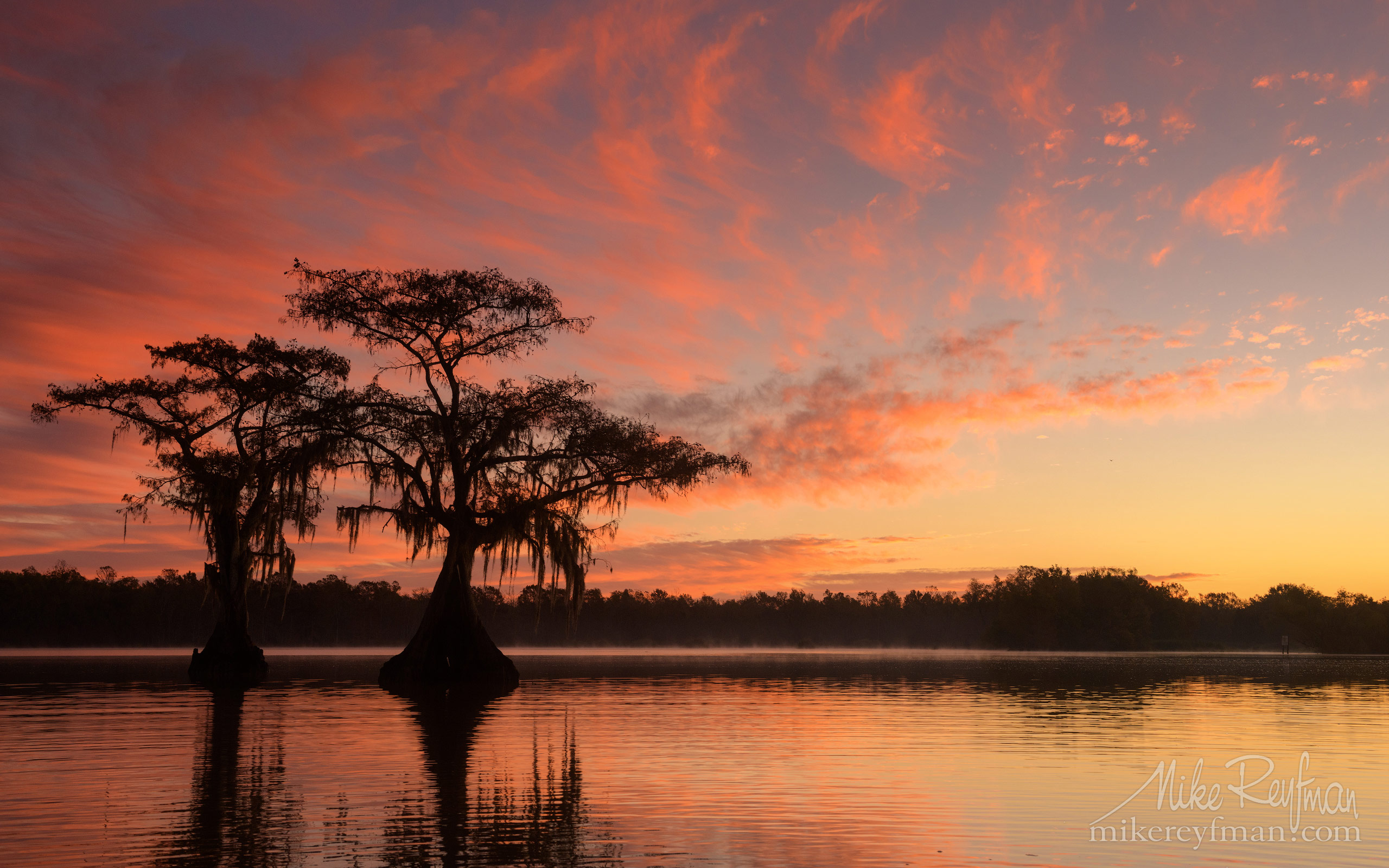 Bald Cypress trees covered in Spanish Moss at sunrise. Lake Fausse, Louisiana, US 084-LT1-50A4277.jpg - Bold Cypress and Tupelo Trees in the swamps of Atchafalaya River Basin. Caddo, Martin and Fousse Lakes. Texas/Louisiana, USA. - Mike Reyfman Photography