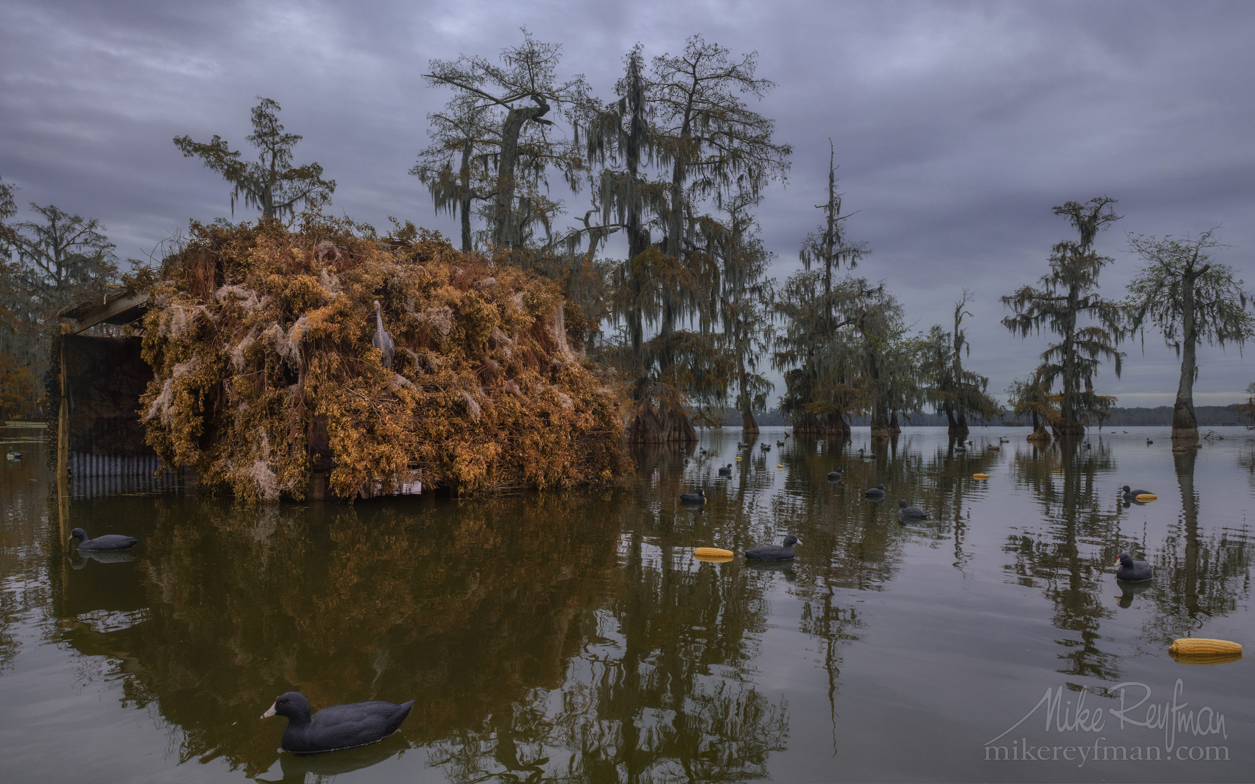 Hunting blind and duck decoys. Lake Martin, Louisiana, US 087-LT1-50A2481.jpg - Bold Cypress and Tupelo Trees in the swamps of Atchafalaya River Basin. Caddo, Martin and Fousse Lakes. Texas/Louisiana, USA. - Mike Reyfman Photography