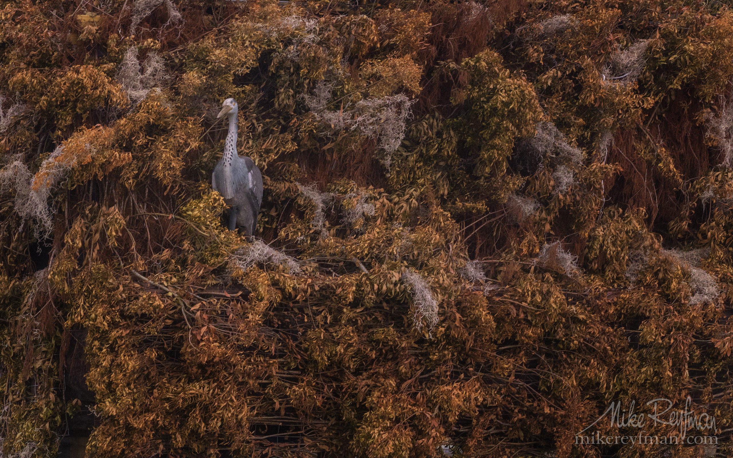 Hunting blind. Lake Martin, Louisiana, US 088-LT1-50A2502.jpg - Bold Cypress and Tupelo Trees in the swamps of Atchafalaya River Basin. Caddo, Martin and Fousse Lakes. Texas/Louisiana, USA. - Mike Reyfman Photography