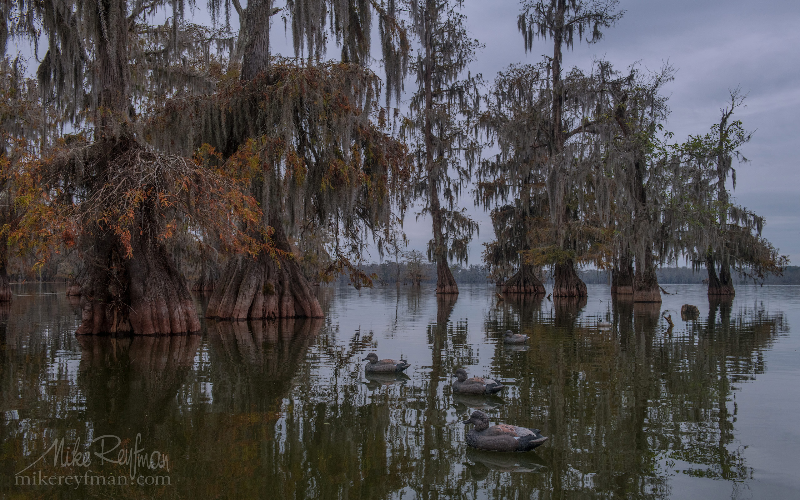 Duck decoys and Bald Cypress Trees. Lake Martin, Louisiana, US 091-LT1-50A2540.jpg - Bold Cypress and Tupelo Trees in the swamps of Atchafalaya River Basin. Caddo, Martin and Fousse Lakes. Texas/Louisiana, USA. - Mike Reyfman Photography