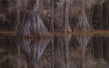 Bald-Cypress-trees-in-the-swamp.-Caddo-Lake,-Texas,-US