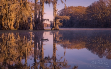 Bald-Cypress-trees-in-the-watter.-Caddo-Lake,-Texas,-US