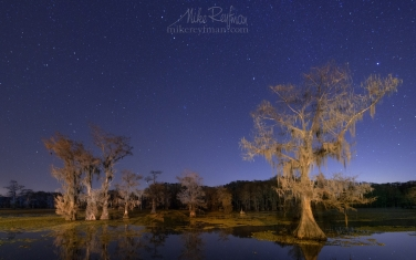 Bald-Cypress-trees-in-the-swamp-under-stary-sky.-Shady-Glade-on-Caddo-Lake,-Uncertain,-Texas,-US