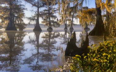 Early-morning-on-Lake-Fausse.-Bald-Cypress-trees-covered-in-Spanish-Moss.-Lake-Fausse,-Louisiana,-US