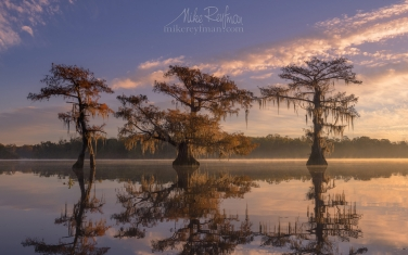 Bald-Cypress-trees-covered-in-Spanish-Moss-at-sunrise.-Lake-Fausse,-Louisiana,-US