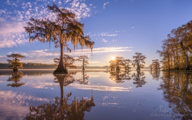 081-LT1-50A4478.jpg Bald Cypress trees covered in Spanish Moss at sunrise. Lake Fausse, Louisiana, US