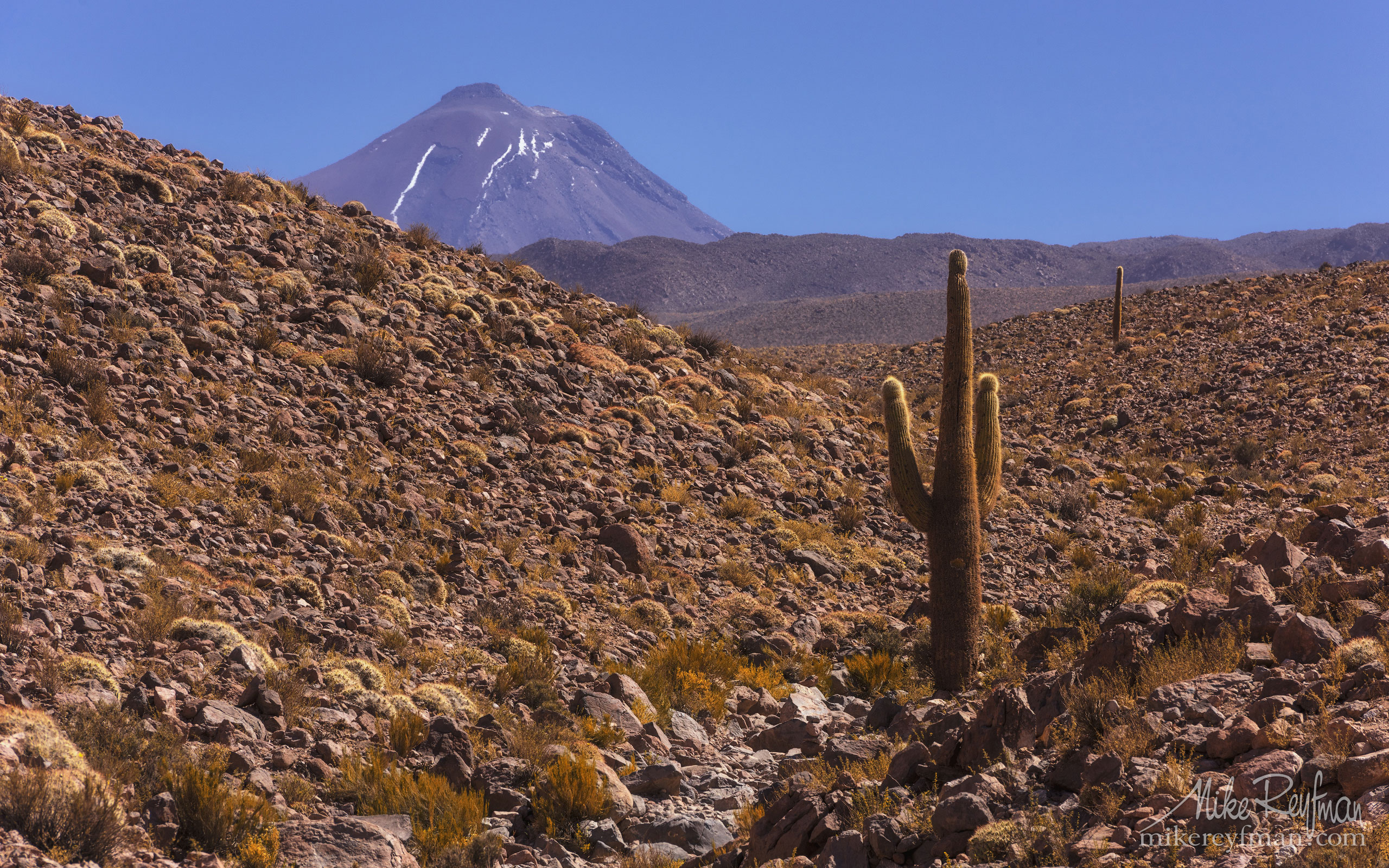 Volcano and Giant Cactus. Altiplano, Chile AA1-D1D8991 - Atacama and Altiplano. The Driest Desert and The High Plain - Mike Reyfman Photography