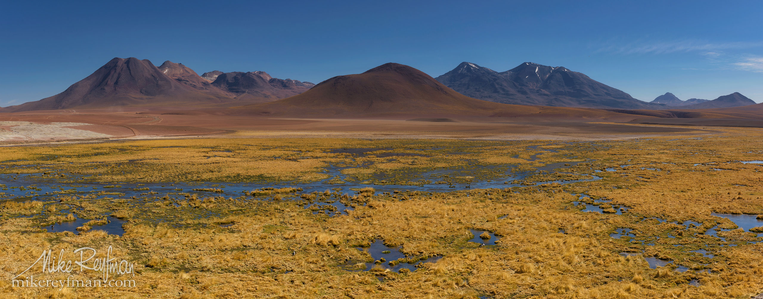 Riverside vegetation. Rio Putana, San Pedro de Atacama, Atacama Desert, Antofagasta Region, Chile AA1-D1D8969_Pano_1x2.55 - Atacama and Altiplano. The Driest Desert and The High Plain - Mike Reyfman Photography